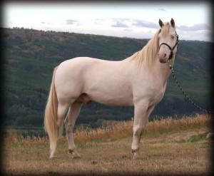 pedigree-127965