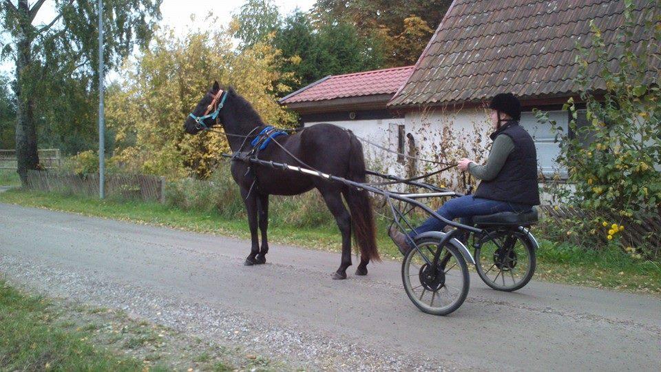 williamvagn